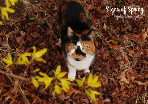 裏庭にも春の到来_b0253205_06303743.jpg