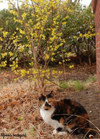 裏庭にも春の到来_b0253205_06315247.jpg
