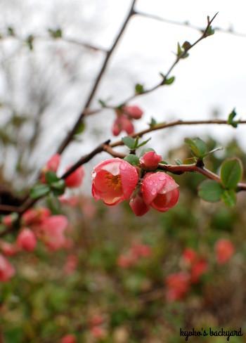 裏庭にも春の到来_b0253205_06325649.jpg
