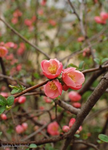 裏庭にも春の到来_b0253205_06335255.jpg