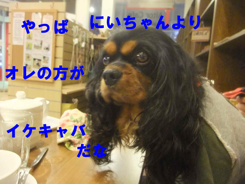 b0165139_20232474.jpg
