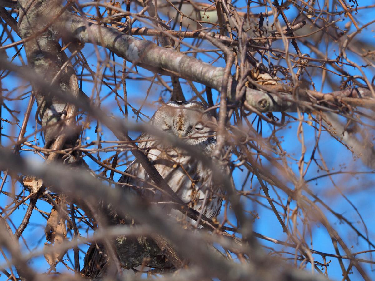 道東の小鳥たち_d0283373_1951994.jpg