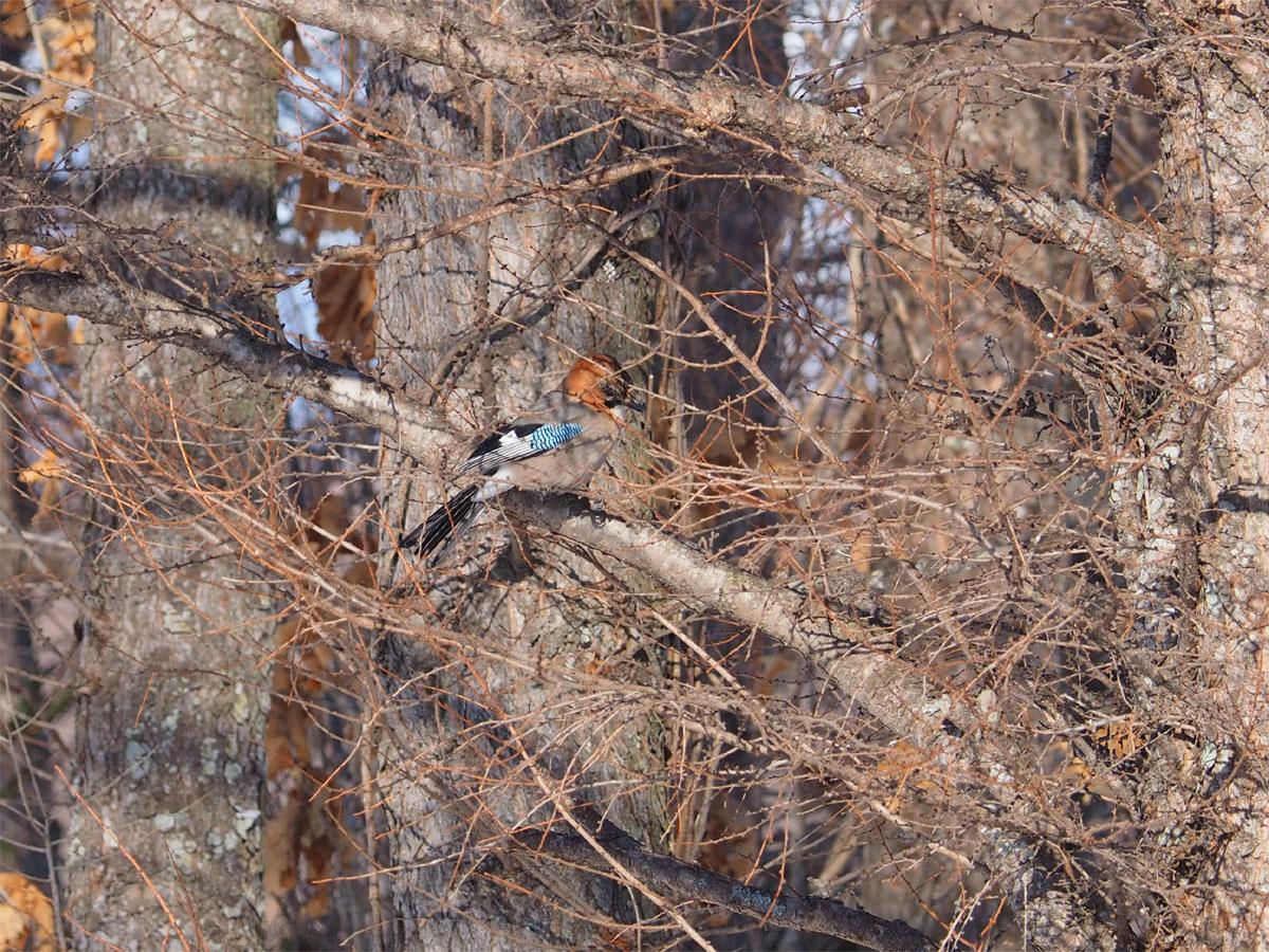 道東の小鳥たち_d0283373_195296.jpg