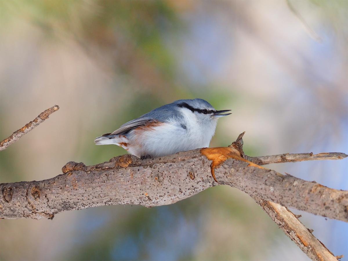 道東の小鳥たち_d0283373_1961594.jpg