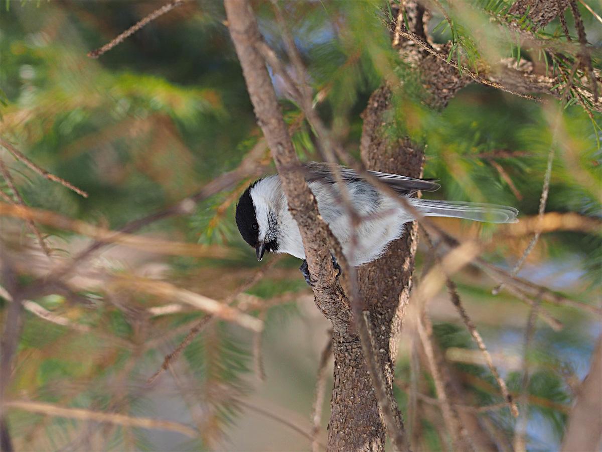 道東の小鳥たち_d0283373_196791.jpg