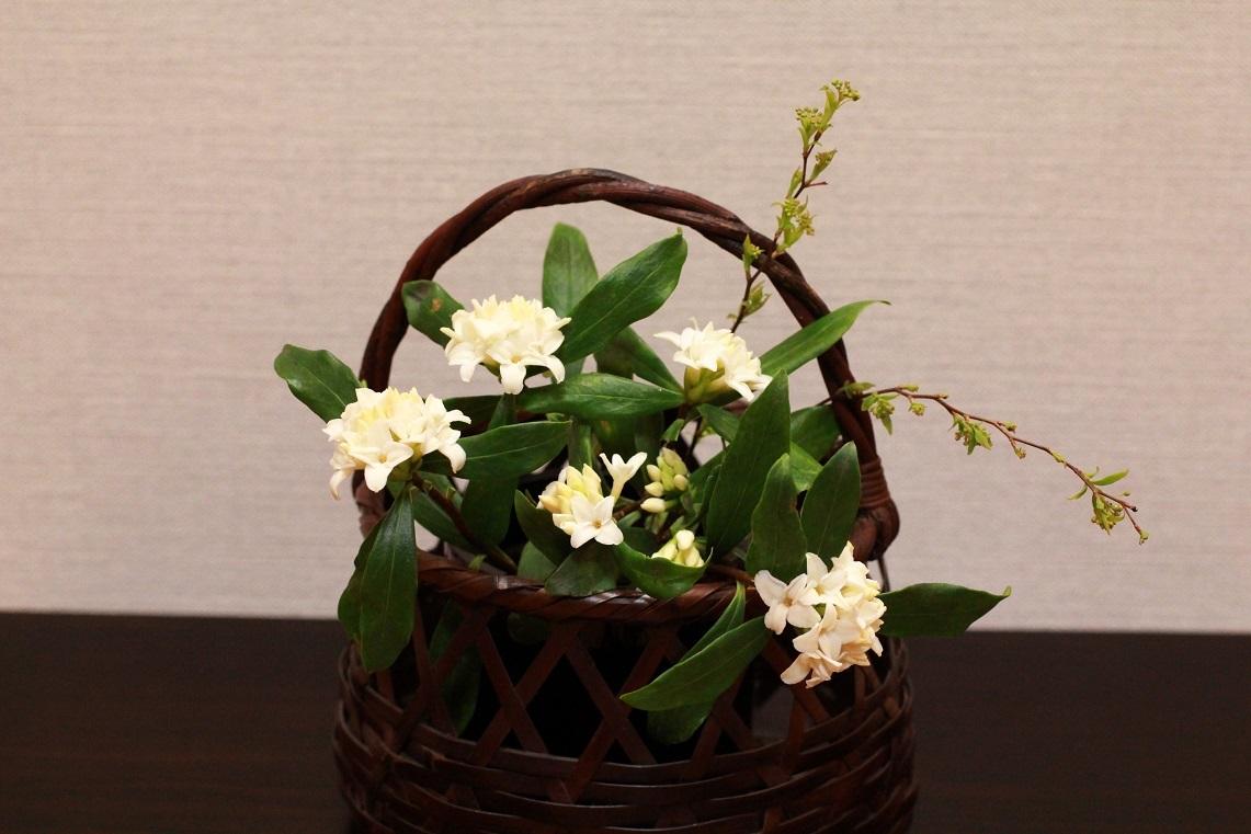 花を活ける ~沈丁花~_a0107574_16090087.jpg