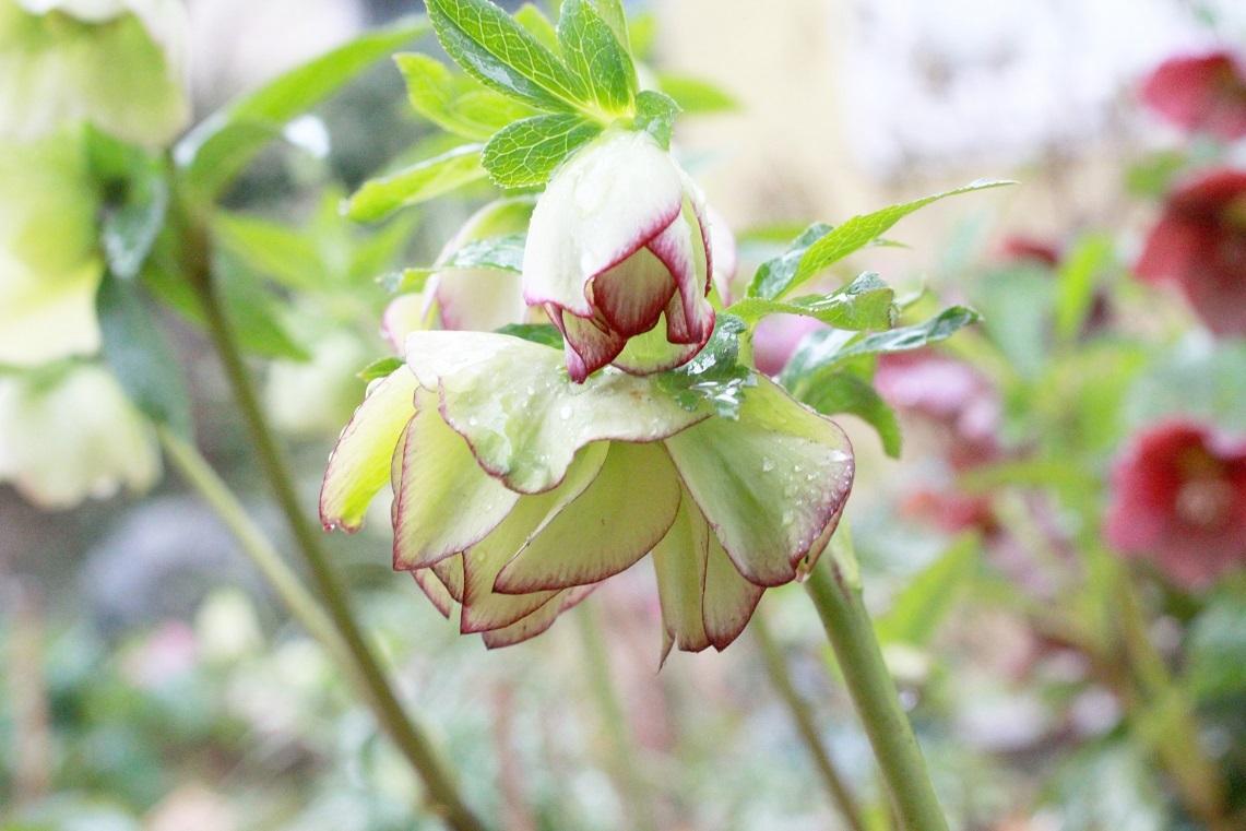 花を活ける ~沈丁花~_a0107574_16135917.jpg