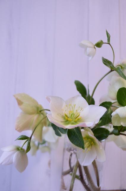 早春の歓び_a0233896_2145875.jpg