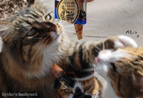 弟猫と姉猫の、おやつ争奪戦_b0253205_01512705.jpg