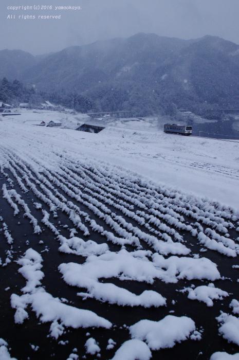 また寒くなり_d0309612_0241092.jpg