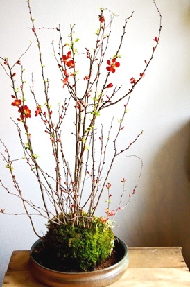 3/6(日)3/9(水)植物ワークショップ_d0263815_17351811.jpg