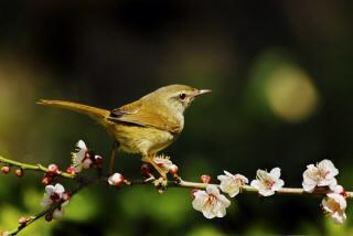 春の訪れ゚・*:.。.❀❀❀_f0015517_01252689.jpg