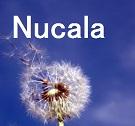 喘息の新治療薬:ヌーカラ®_e0156318_1736469.jpg