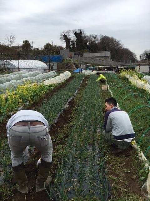 皆さんこんにちは・・今朝は畑で玉葱の畝の雑草取りです 飯田入れて総勢5名でした_c0222448_13551097.jpg
