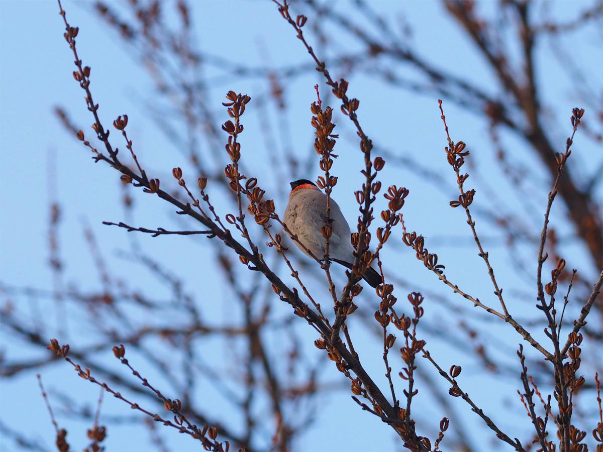 道東の小鳥たち_d0283373_9214767.jpg