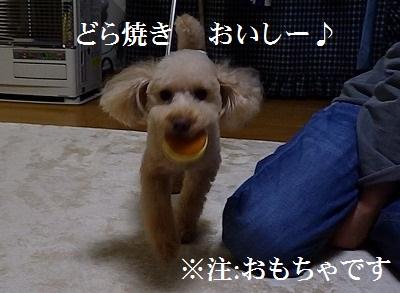 b0052375_1621132.jpg