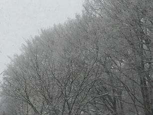 軽井沢は雪_e0182479_075815.jpg
