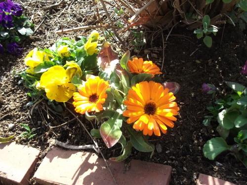 3月 すくすくと芽吹いています_f0334882_18145230.jpg