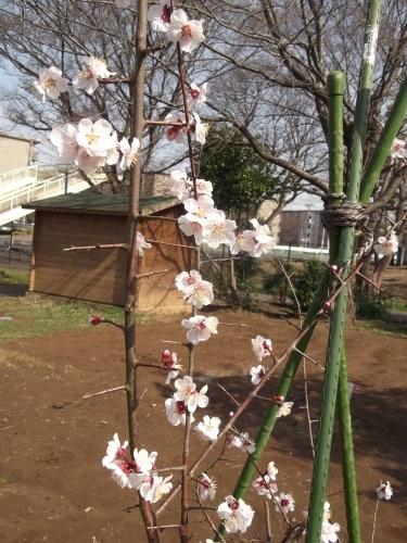 3月 すくすくと芽吹いています_f0334882_18172322.jpg