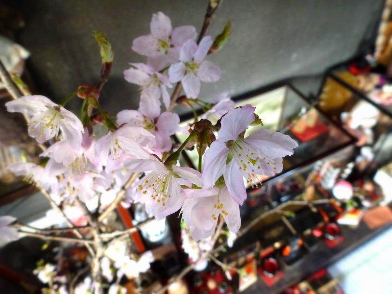 お家でお花見(^_^)❀_c0165589_15383810.jpg