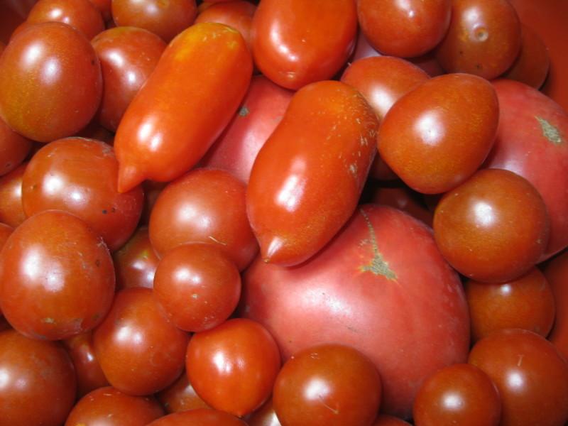 完熟「トマトソース」作りと、ウインドースクリーン。_a0125419_19045349.jpg