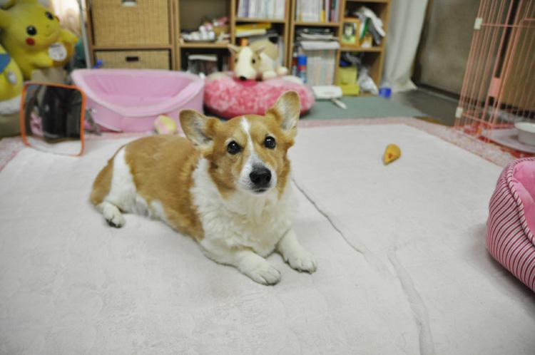 2011年3月25日の小名浜_d0102523_133129.jpg