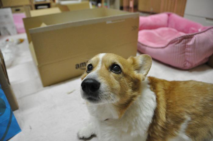 2011年3月25日の小名浜_d0102523_13323924.jpg