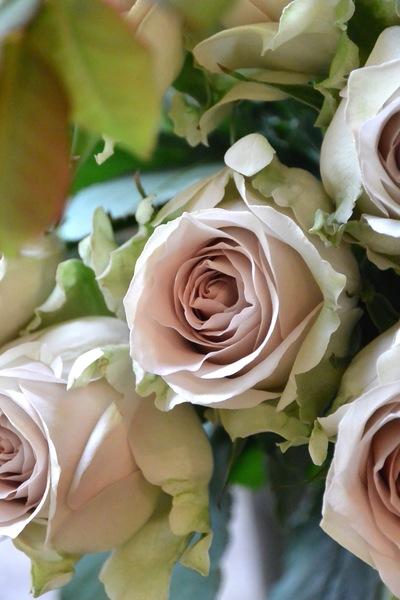 """バラ""""テンダンス""""と""""KIZUNA""""の葉っぱ。。。_a0229658_21433272.jpg"""