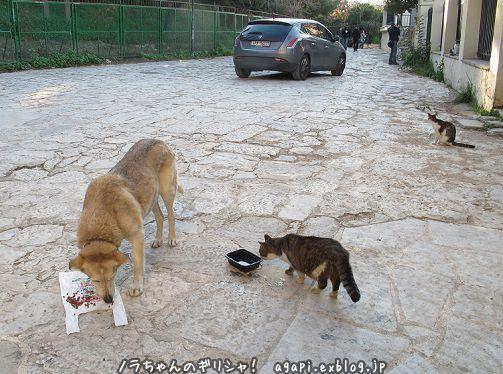ノラ犬君の飲料水を盗み飲む野良猫_f0037264_16465726.jpg