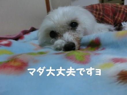 b0193480_22332169.jpg