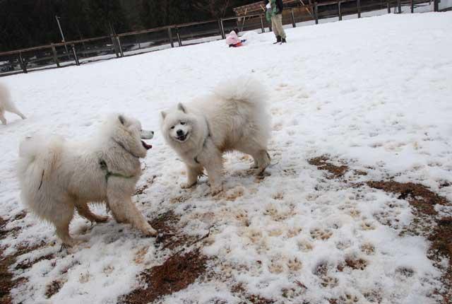 今年も雪中オフ行ってきました_b0120492_16463479.jpg