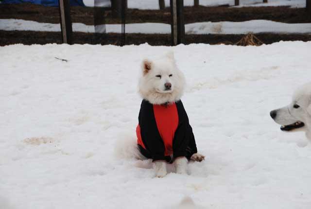 今年も雪中オフ行ってきました_b0120492_16533535.jpg