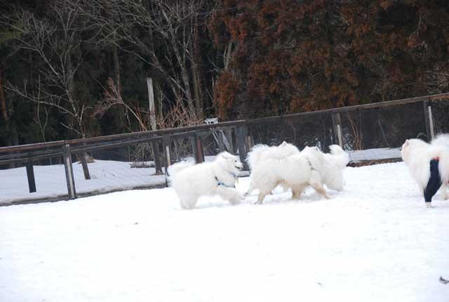 今年も雪中オフ行ってきました_b0120492_17245332.jpg