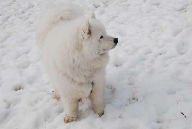 今年も雪中オフ行ってきました_b0120492_1750138.jpg