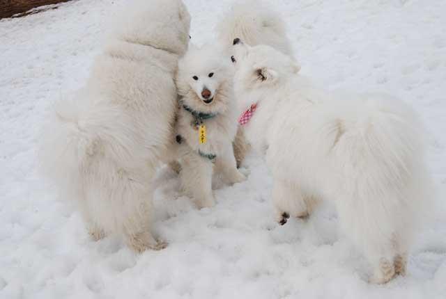 今年も雪中オフ行ってきました_b0120492_1752122.jpg