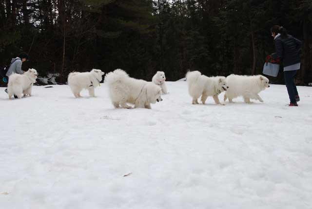 今年も雪中オフ行ってきました_b0120492_17541818.jpg