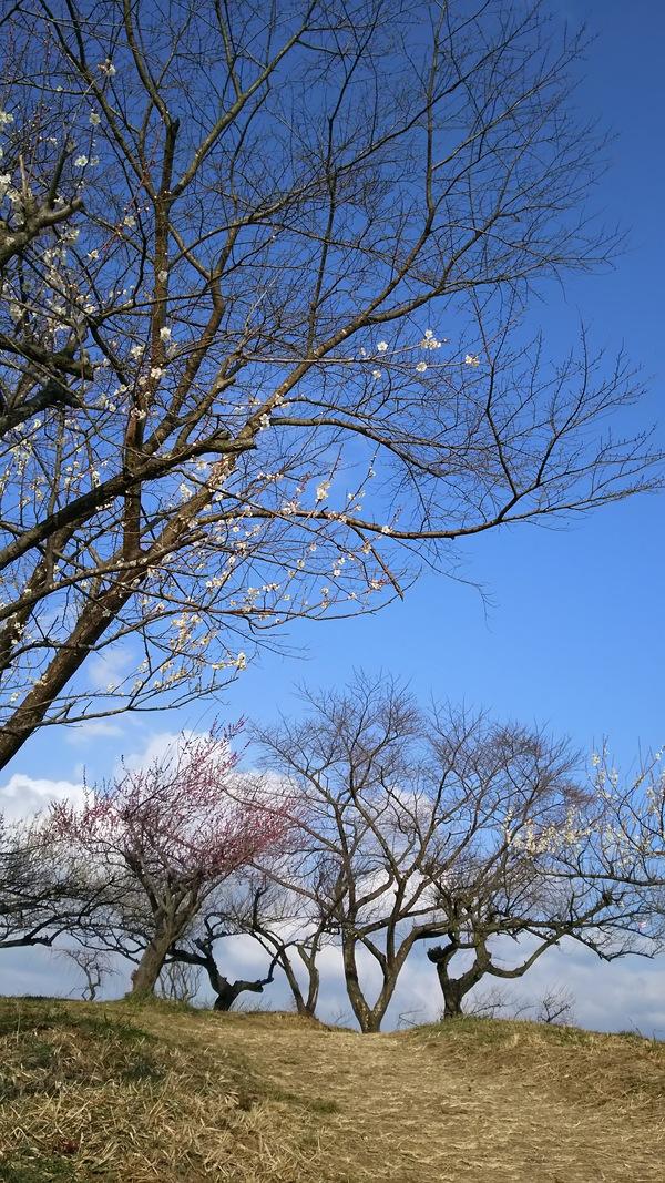 球磨郡錦町にて_c0090212_13592834.jpg