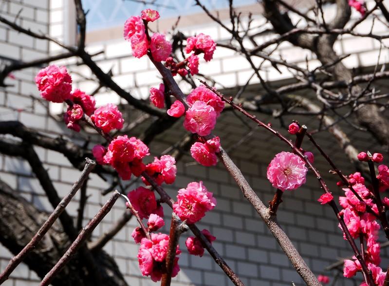 花のある風景_b0093754_22574194.jpg