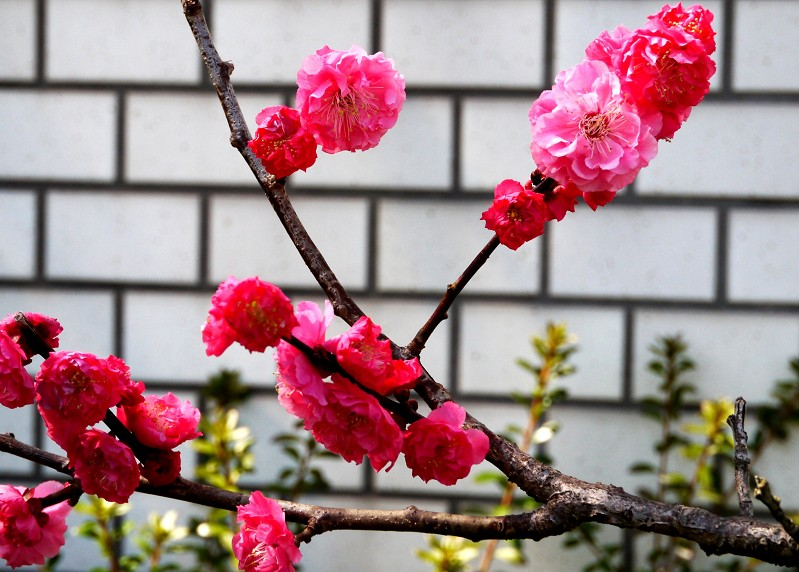 花のある風景_b0093754_22581187.jpg