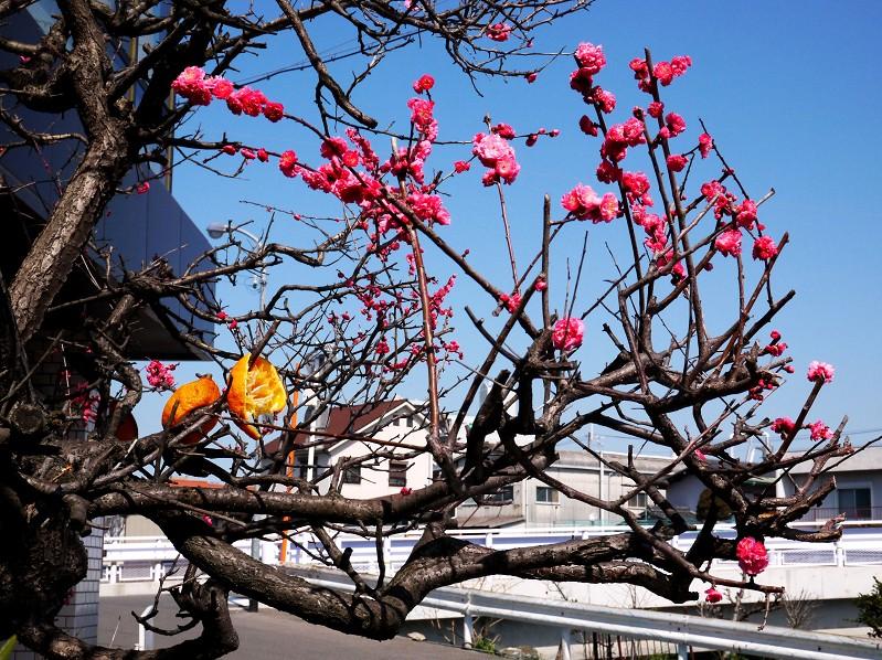 花のある風景_b0093754_22582089.jpg