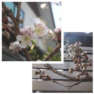春はきたけれど_a0201257_15041511.jpg