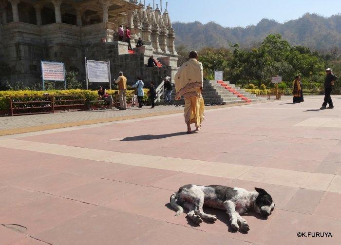 インド・ラジャスタンの旅 11 ジャイナ教の聖地ラーナクプル_a0092659_22213640.jpg
