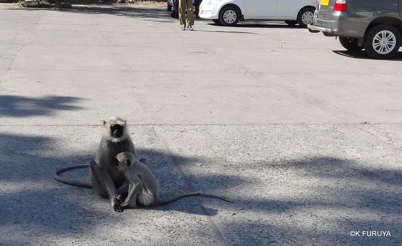 インド・ラジャスタンの旅 11 ジャイナ教の聖地ラーナクプル_a0092659_22214219.jpg