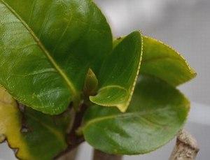 一気に咲いた庭の椿、そして今 ・・・_b0102572_1835316.jpg