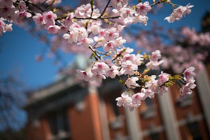 桜満開の旧地方裁判所_d0353489_21142828.jpg