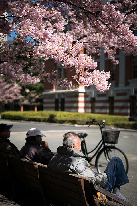 桜満開の旧地方裁判所_d0353489_21335254.jpg