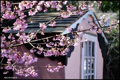 ** 梅は咲いたか~ 桜も咲いたよ~ **_c0207890_17514781.jpg