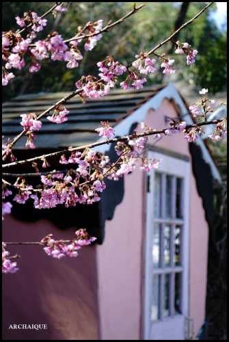 ** 梅は咲いたか~ 桜も咲いたよ~ **_c0207890_17515850.jpg