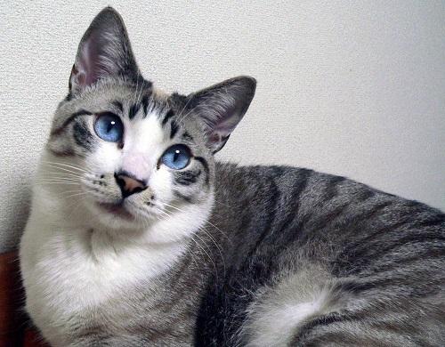 目の色が・・・。_a0333195_22020621.jpg