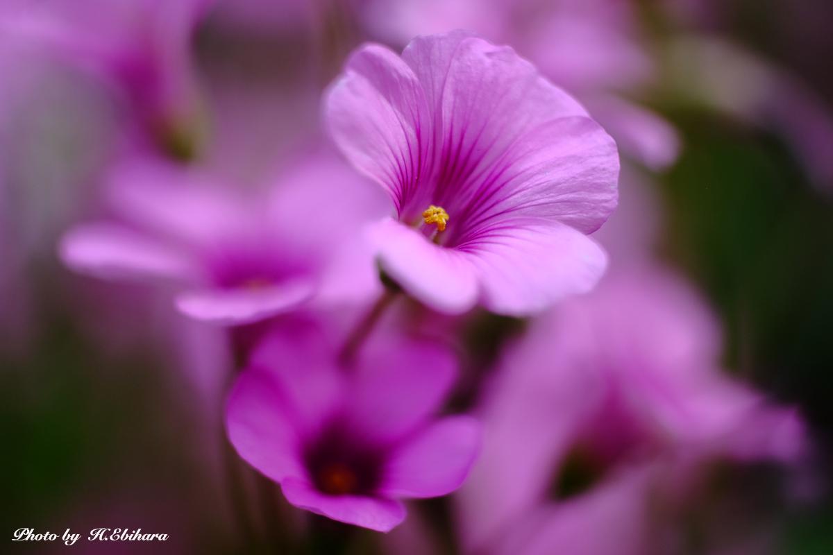 花の季節_e0070307_20450313.jpg